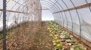 farmer 2 tunnel